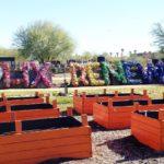 PHX RENews, urban garden, community space, Phoenix